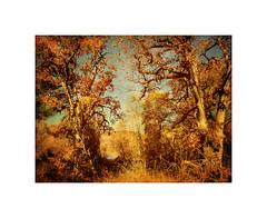 Oaks Along The Rogue ~ Haiku (Johnrw1491) Tags: poems poetry essay rogue river medford denman wildlife refige kinglets textures oaks trees madrones cottonwoods