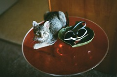 Tabby on a Table (maripatis) Tags: film fujifilm 35mm photography seattle pentax asahi spotmatic cat kitten