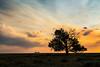 Montana Sunset (Elainе) Tags: yellow sunset montana horses tree sky silhouette