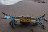 Stay back! (Chef Luis Jiménez) Tags: crab bluecrab cangrejo jaiba seafood sea beach sand olympus nature outdoors mexico travel nayarit playa