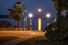 October Harvest Moon 🌴🌕 Vancouver, BC (Michael Thornquist) Tags: fullmoon harvestmoon fullharvestmoon luna englishbay englishbaybeach seawall beachave beachavenue palmtrees reflection vancouver myportcity 604now photos604 explorebc explorecanada ilovebc britishcolumbia pacificnorthwest pnw canada