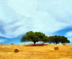 Alentejo | Алентежу (António José Rocha) Tags: portugal alentejo ceifa colheita seara árvores sobreiros sombra cores amarelo azul verde rolos natureza beleza serenidade planície