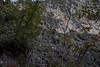 DSC01887 (cassolclaudio) Tags: montagna ferrata rio secco trento