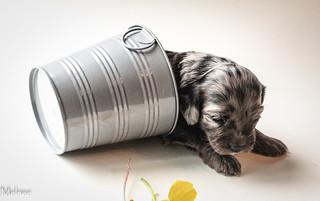 puppy series