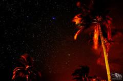 CÉU_ESTRELADO_MOSSURIL_NAMPULA_MOZAMBIQUE (paulomarquesfotografia) Tags: paulo marques pentax k5 chinon 55m f14 céu sky night noite atral astrofotografia longa exposição astrophotography long exposure estrelas stars coconut tree coqueiro