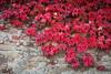 IMG_4168 (Niki.Suppan) Tags: vienna autumn fall october oktober herbst wien wanderung wandern leopoldsberg hügel canon eos ef 2470mm 28 f28 dslr slr spiegelreflexkamera vollformat fullframe 5dii