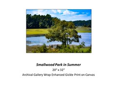 "Smallwood Park in Summer • <a style=""font-size:0.8em;"" href=""https://www.flickr.com/photos/124378531@N04/24076440788/"" target=""_blank"">View on Flickr</a>"