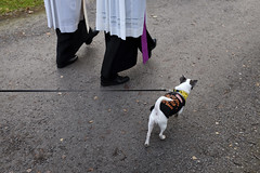 Marching Priests (Monty May (OBSERVE)) Tags: iserlohn germany street streetphotography humour dogs