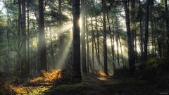 Mystical Forest (Dan_Fr) Tags: autumn trees leaves landscape light path fall beam sunrays woodland stockgrove heathandreach england uk forest sony a7r