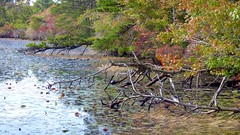 (mahler9) Tags: jaym october 2017 pond leaves capecod provincelands provincetown panasonic lumix