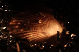 Sidelit Sea Shell
