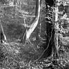 Mamiya 390 (salparadise666) Tags: mamiya c330 sekor 80mm orange filter fomapan 10064 caffenol rs 13min nils volkmer vintage camera film analogue medium format 6x6 square landscape nature dreamy tree detail mood autumn hannover region niedersachsen germany