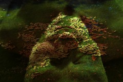 Sarvan I (mikael_on_flickr) Tags: sogni drømme sognatore drømmer dreamer mikael me i io ich moi ego self face faccia viso gesicht silvano salvan dreams forestcreature