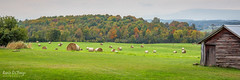 Hay Bales in Middlebury, VT (skybluerenee) Tags: vermont country countryside outside outdoor farm rollinghills hillside nature landscape