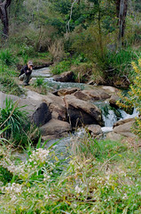 Mundy Regional Park, Forrestfield, Western Australia - 20170916.002 (Cecilia Temperli) Tags: australia westernaustralia perth forrestfield lewisroadwalk springflowers spring film kodak nikonf3hp kodakgold200 bushwalking mundyregionalpark whistlepipegully