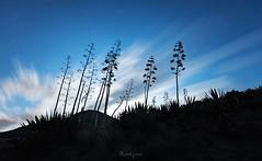 Desert wind (visnuh) Tags: canoneos5dmkiv canonef1635f28liii almería cabodegata parquenatural nocturna longexpo largaexposición longexposure
