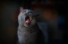omg.. (salihseviner) Tags: omg cat cats portrait pet animal