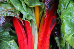 A Plant-Based Diet (David K. Edwards) Tags: leafy green vegetable chard red outoffocus chomp chew gulp burp belch fart