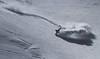 _MG_0941_Snapseed (St Wi) Tags: snowboard snowboarding freeride freeriding rossignol nitro snow pow powder skiing offpiste backcountry austria alps salzburg pinzgau zauchensee zellamsee salzburgerland onebigpark kitzsteinhorn kaprun badgastein gastein jonessnowboards winter österreich schnee deep fresh rock cliff jump hike bootpacking splitboarding splitboard burton burtonsnowboards