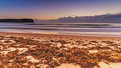 Dawn Seascape and Seaweed on the Beach (Merrillie) Tags: daybreak sand landscape macmastersbeach nature dawn bouddipeninsula newsouthwales clouds earlymorning nsw seaweed beach centralcoast australia sunrise sea coastal seascape sky waterscape outdoors coast water waves