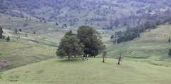 Kodaikanal (Balaji Photography - 5 ,400,000+ views -) Tags: kodaikanal canon canondslr canoneos canon70d scenic tours tourist touristspots touristspot toursindia tourism naturesfinest beautiful green greenery greenforest