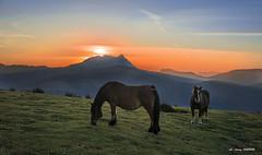 Las yeguas no se tumban para dormir (Jabi Artaraz) Tags: dormir jabiartaraz jartaraz zb euskoflickr saibi caballos horse amanecer anboto euskadi
