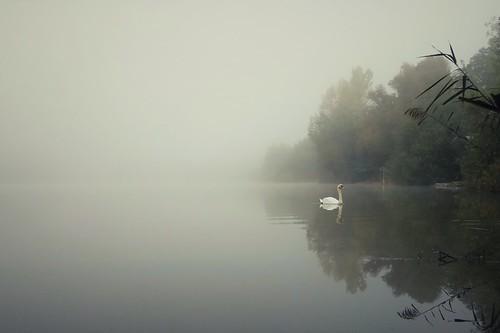 Fog at the lake