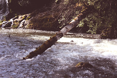 fallen-trees-in-the-woods-make-no-sound-so-are-oceans-quiet-when-we're-not-around (FADICH PHOTOGRAPHY) Tags: oly olympia washington fadichphotography 2017 nature park tumwater tumwaterfalls falls plants trees river