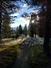 Frosty morning (s__i) Tags: yosemite yosemitenationalpark johnmuirtrail tuolumnemeadows