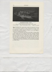 scan0438 (Eudaemonius) Tags: bk3188 exotic aquariam fishes a work of general reference 1966 raw 20171101 eudaemonius bluemarble bounty