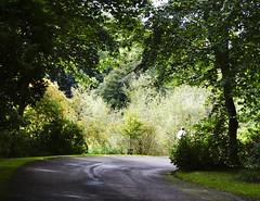 Round the bend....? (Elisafox22) Tags: elisafox22 sony nex7 helios442 helios madeinussr 258 8blade vintagelens htmt trees shade sunshine outdoors fyvie fyviecastleloch lochside walk road bend disappearing figure path leaves foliage aberdeenshire scotland elisaliddell©2017 htt texturaltuesday daarklands