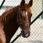 2017 RANDOS chevaux