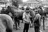 Foire aux chevaux de Fay sur Lignon (nicéphor) Tags: cheval foire auvergne rhônealpes canon eos50d