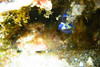 20171001-DSC_8700.jpg (d3_plus) Tags: 南伊豆 southizu 息こらえ潜水 drive fish port apnea closeuplens 静岡 1030mm izu ucl165m67 skindiving j4 風景 underwater nikon1 景色 ウォータープルーフケース 魚 空 watersports wpn3 sea ニコン マリンスポーツ japan nikon 静岡県 水中 ニコン1 sky nikonwpn3 inonucl165m67 素潜り クローズアップレンズ 漁港 nikkor マクロ スキンダイビング nikon1j4 伊豆 2781mm 海 snorkeling inon diving scenery イノン ズーム fishingport 1030mmpd marinesports shizuoka 日本 1nikkorvr1030mmf3556pdzoom waterproofcase シュノーケリング zoomlense