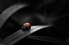 Black future with a small hope (Tjidididi) Tags: darkfuture autumn
