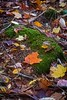 DSC_3335 (morganjellen) Tags: catskills schohariecounty stateforest fall foliage autumn ny newyork hikingtrail burntrossmannlooking glass pondleavesfall colors