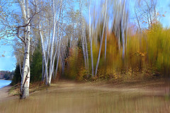 Autumn Painting (lfeng1014) Tags: autumnpainting 白桦树 whitebirch autumncolours autumn algonquinpark canoelake multipleexposure camerapanning painting landscape artisticexpression impressionist canon5dmarkiii ef1635mmf28liiusm 110second lifeng forest