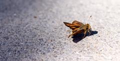 From Dark To Light (Sdebord16) Tags: bug dark light sidewalk cute amazing school injured butterfly clary