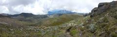 Alpine vegetation on Puracé volcano (Christophe Maerten) Tags: colombia colombie jungle cauca huila  purace paramo tierra indiguena native people parque natural parc volcan volcano vulkaan