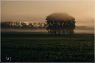 Nebel und Sonne II