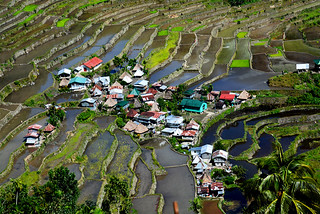 Rice terraces Batad Philippines _6625