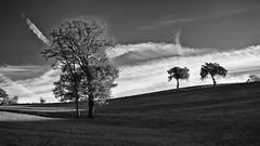 arbres et ciel (cham_) Tags: saintgenest ruby5 ruby10