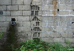 Ventanales (Franco D´Albao) Tags: francodalbao dalbao fujifilmfinepixhs50exr muro wall ventanas windows bloques blocks