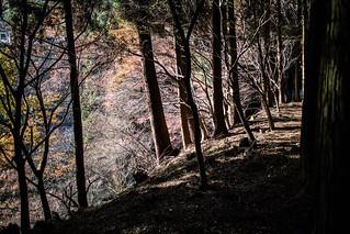 小径沿いの秋/ A trailside autumn