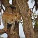 Mara Safari-2025.jpg
