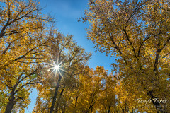 Starburst with fall foliage and gorgeous skies