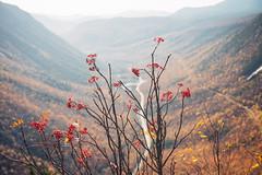 Crawford Notch, NH (gabe.mirasol) Tags: nikon d600 nikkor 2470mm 2470 f28g f28 28 fx zoom landscape autumn fall foliage mountain new hampshire