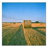 Harvest Time - Agfa Ultra 50 exp* (magnus.joensson) Tags: sweden skåne söderslätt rolleiflex carl zeiss tessar 75mm f35 agfa ultra 50 exp 200204 c41 6x6 medium format harvest sunset