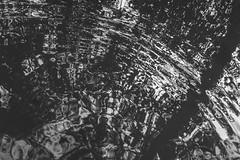 Autumn Wave (jordanlibioulle) Tags: 1855 1855mm abstract air autumn bw belgium black blackwhite blackandwhite camera d3200 dark darkness digital distortion exterior figure forest form green grey jordan leaf libioulle lightroom liquid mirror mono monochrome nature nikkor nikon nkon ornament outside pattern photography plant pool puddle reflection reflex reflexion rythm shadow shape sky somber sun sunday sunshine surface texture transparency transparent tree up vegetal water white wild