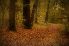 Herbst (FK Fotografie & Kunst) Tags: florije florijekohler flower herbst fotografie photographieren mikro blätter bunt blume art natur natürlichschön naturschutz bild kultur kunst flo